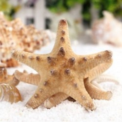 2Pcs természetes csillag tengeri csillag Shell akvárium táj DIY gyártása kézműves dekoráció
