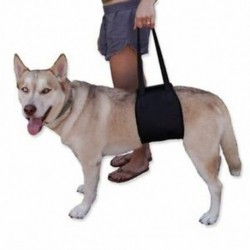 Kedvtelésből tartott kéz kedvtelésből tartott kutya-védő övvel posztoperatív védelem a rehabil G1H8-val